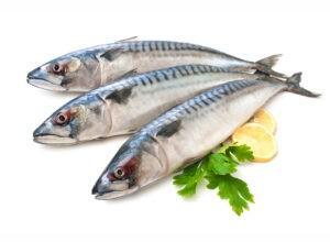דג מקרל קפוא